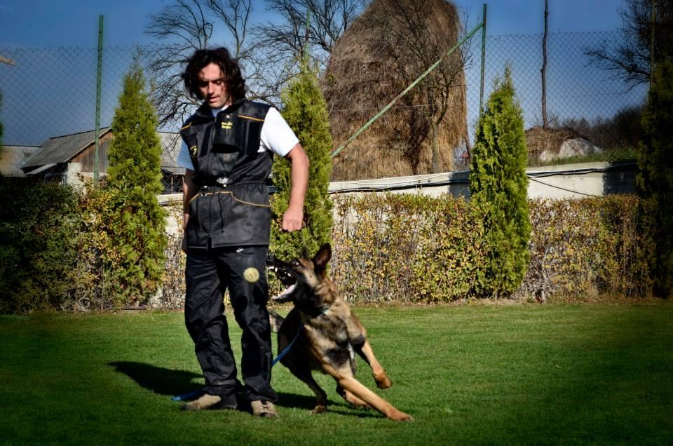 Dejlig Belgisk Hyrdehund: Malinois brun med sort ansigt sælges i Odense Sv UE-38