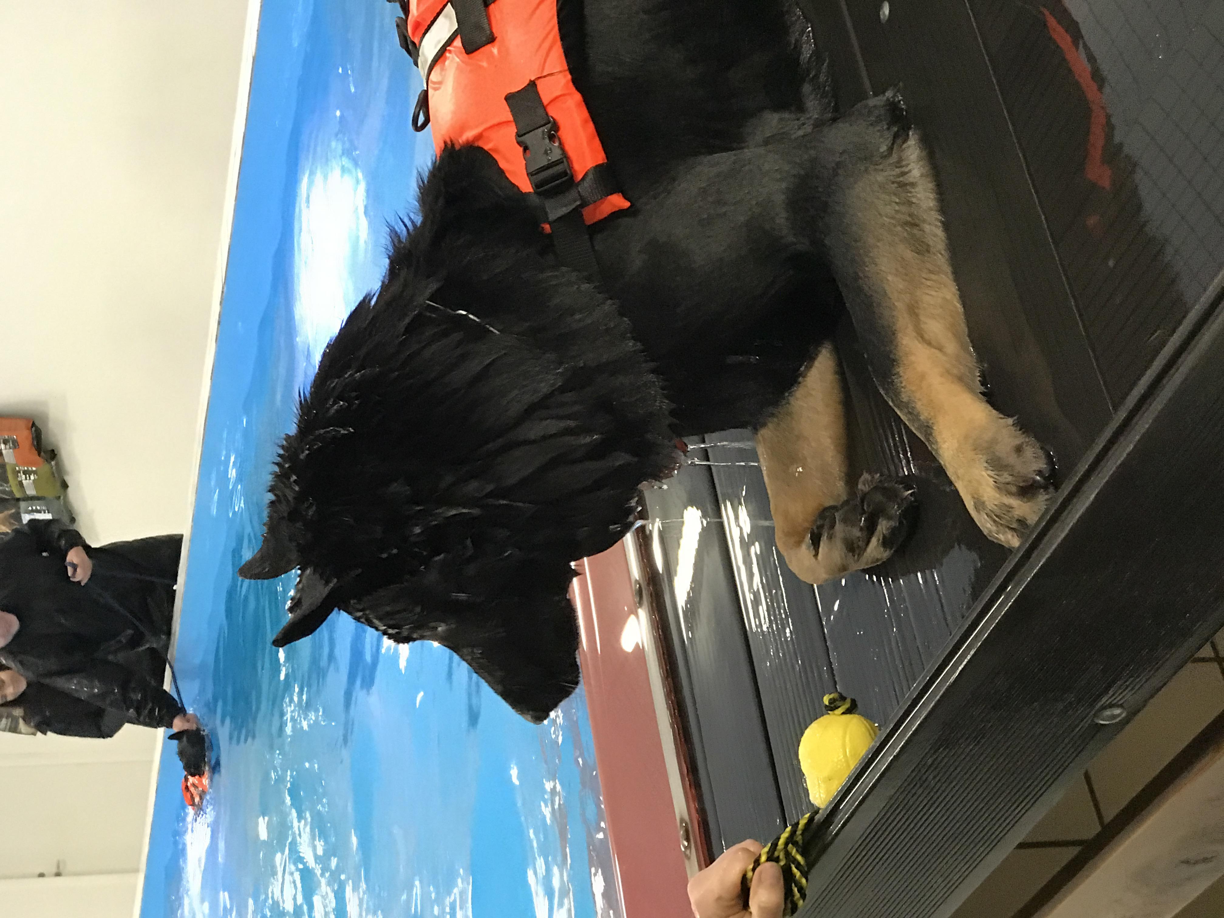 Schæferhund